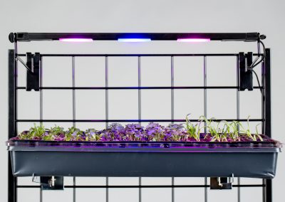 GL1803-02_18in Growlight on grid rack